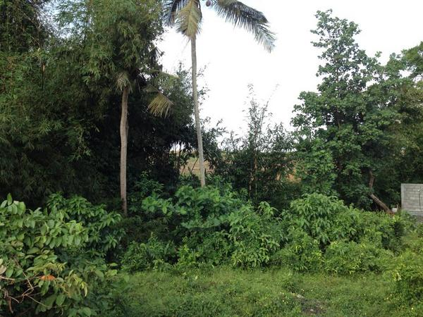 Land for sale in Pererenan, Bali.