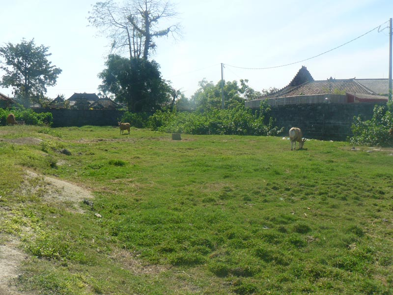 Land for sale in Tandeg, Bali.