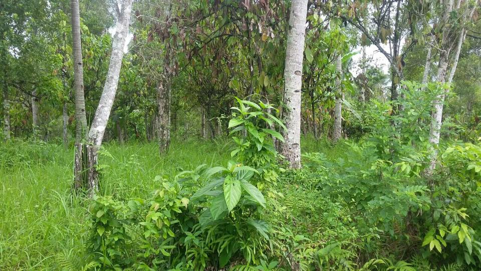 Land for sale in Medewi, Bali.